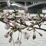 Photo of Chiba Teganuma Shinsui Plaza