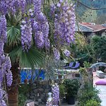 In April the Wisteria is in full bloom through the trees around the courtyard restaurant İzela