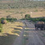 Schotia Safaris Private Game Reserve Photo