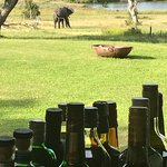Elephant from the veranda