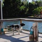 Buddy enjoys our deck/dock