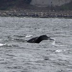 A tail of a whale. Photo is the property of Lee Sprecace Clark