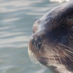 Seal in the boat at tour