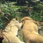 Foto de San Francisco Zoo