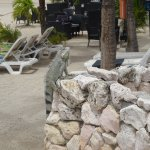 Photo of Plaza Resort Bonaire