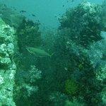 Sea Dragon Dive Center Foto