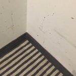 Ungepflegt! Wände verdreckt, Boden versifft und eine Steckdose kommt aus der Wand. Die Waschbeck