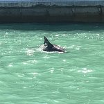 The Dolphin Explorer Foto