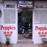Photo de Poppies