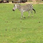 Photo of Ree Park Safari