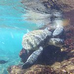 turtle and fish just offshore in shallow waters