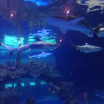 Some Aquarium views while dining.