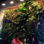 Interior vertical wall of plants, Singer Hill Cafe