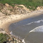 Point Reyes Seashore National Park Foto