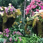 Elephant Topiaries with Orchids