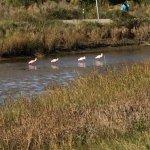 Foto de Baytown Nature Center
