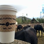 Coffee back to work with the horses