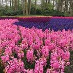 Photo de Keukenhof Garden