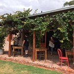 wine tasting inside or out on the veranda under the vines
