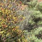 Photo de Coyote Hills Regional Park