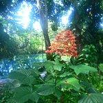 Tropical flower in stunning garden surrounds