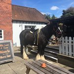 The joy of being in the New Forest, the horses are even in the pub !