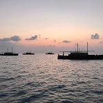 Safari Island Foto