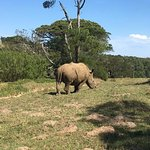 The back end of the male rhino