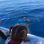 pod of bottlenose dolphins off the front of the catamaran