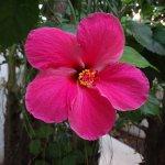 Beautiful flowers all around