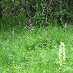 wilde Orchideen Nähe Hotel Orchideental