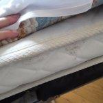 mildew on mattress