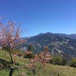 農場内の桜の木