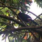 Photo of Pasion Costa Rica