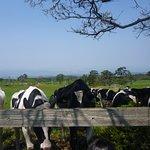 Photo of Daisen Makiba Milk no Sato