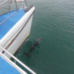 Delphine unter dem Boot