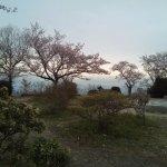 二上山雌岳の桜
