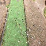 wanna play dirt-ball mini golf?