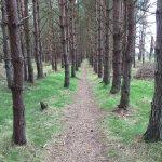 Ladybank Woods