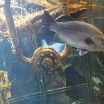 un des aquariums