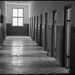 cells © joel plotkin