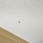"""Water bug"" aka roach."