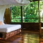 Spot sloths as you lie in bed in cabin 1