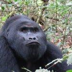 On the gorilla trek