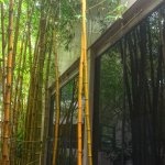 Golden bamboo reflected in the art gallery wall