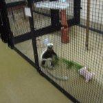 lemur indoor tour