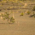 Foto di Kilauea Iki Trail