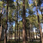 Photo de Tall Pines Harbor Campground