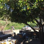 Small eating area under a Valencia orange tree.