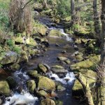 The brook.